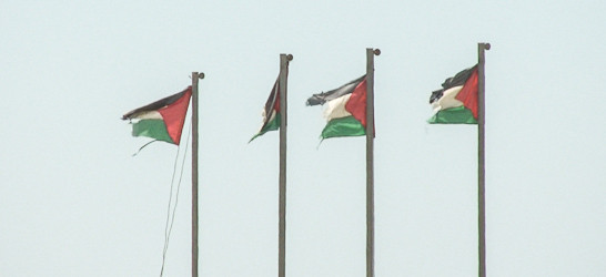 Four Palestinian flags